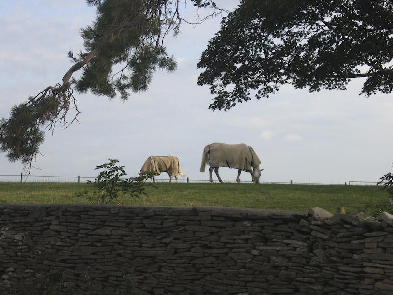 Vackert landskap i Somerset