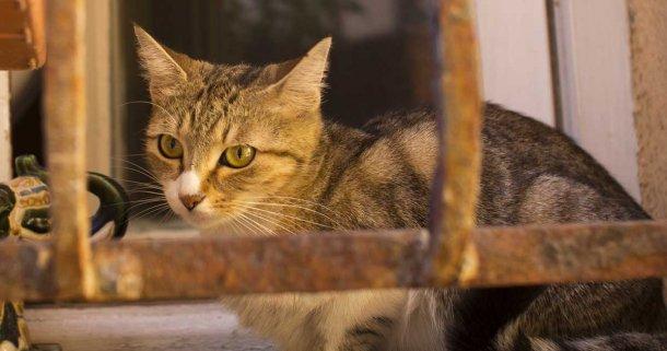 katt-2936
